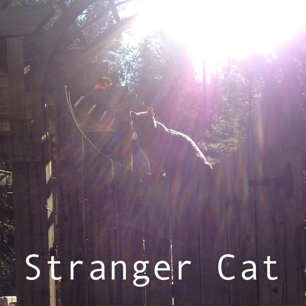 strangercatcat
